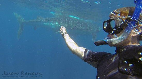 Squalo Adventures PADI Dive Resort #22312: Do whale shark selfies :)