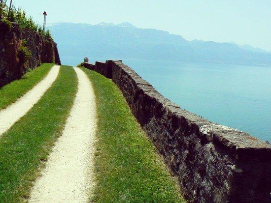 Corniche Lavaux Vineyards: The beautiful trail