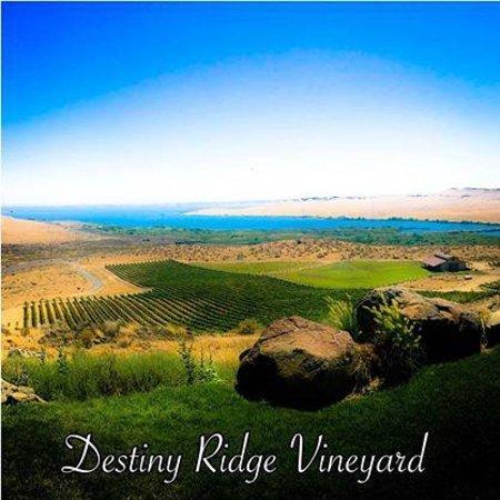 Alexandria Nicole Cellars: Destiny Ridge Vineyard