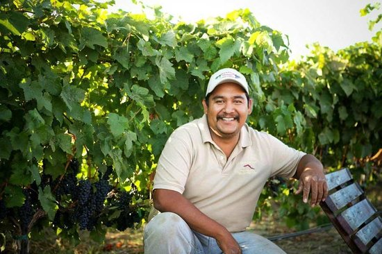 Alexandria Nicole Cellars: Jose our Vineyard Manager