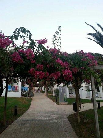 Insotel Tarida Beach Sensatori Resort : Il verde di insotel!