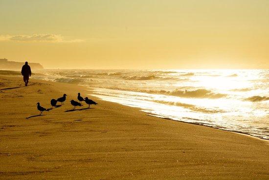 Surf Club Resort: Sunrise at hotel beach