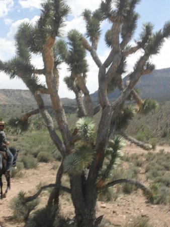 Grand Canyon Ranch Day Tours Cactus And Joshua Trees