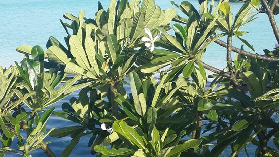 Constance Moofushi : Nice tree