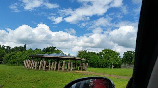 Blair Drummond Safari and Adventure Park: Safari drive through... Let down :(