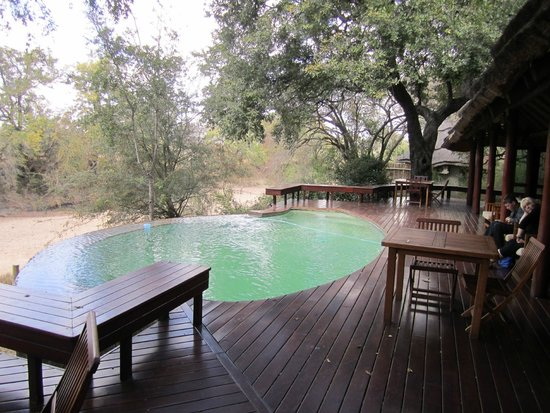 Imbali Safari Lodge: Lobby's infinity pool