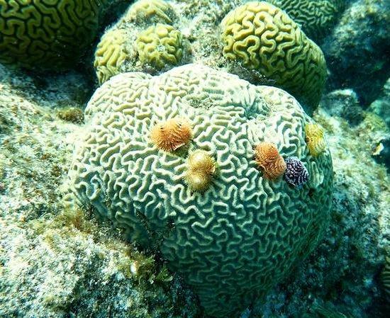 Curacao Marriott Beach Resort & Emerald Casino: Snorkeling off hotel beach