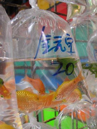 Goldfish Street (Tung Choi Street) : Goldfish in bags - Tung Choi Street.