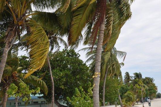 Stingray Beach Inn : Maafushi