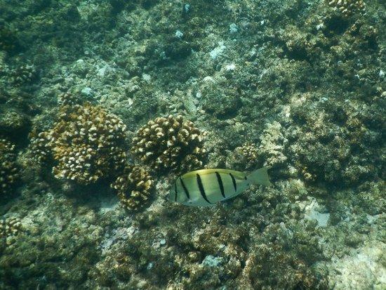 Baja Bungalows: surgeonfish