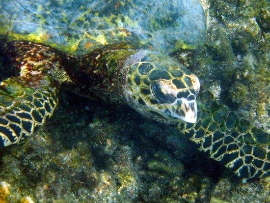 Baja Bungalows: green sea turtle
