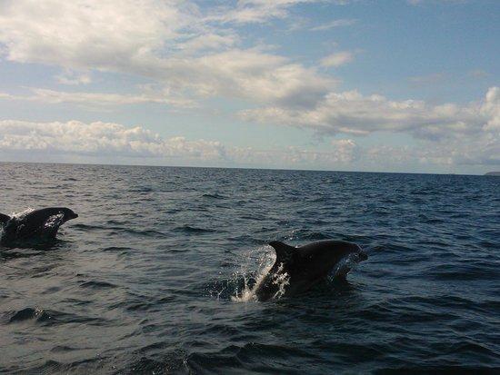 Orca Sea Safaris: Dolphins