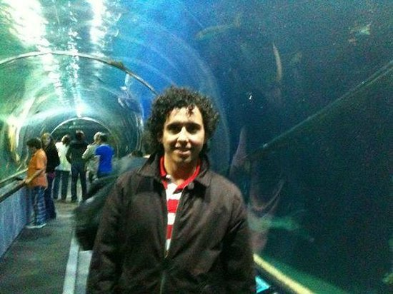 Aquarium of the Bay: tuneis do aquario