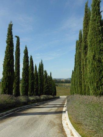 Relais Villa Grazianella - Fattoria del Cerro : Viale ingresso