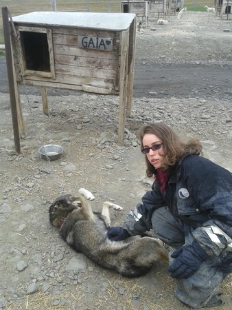 Svalbard Husky: Yes, the dogs really are that friendly, even to someone nervous with dogs