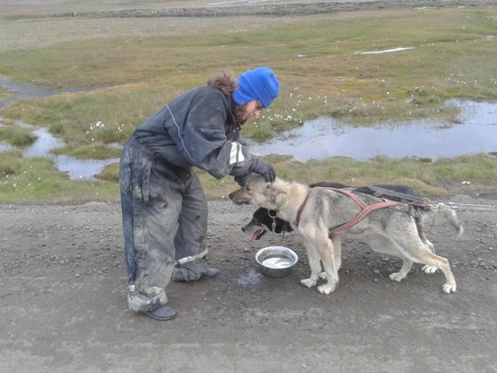 Svalbard Husky : A pit stop, husky style. The dogs get a drink on the road home.