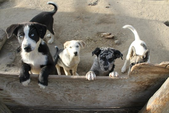 Sky High Wilderness Ranch: The amazing puppy pen
