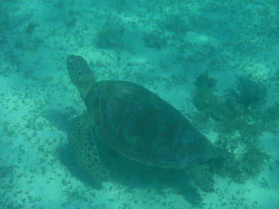 Lankayan Island Dive Resort: Swam with lots of turtles!