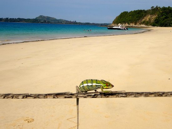 Andilana Beach Resort : Escursione su isola