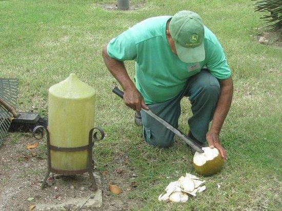 Melia Cayo Guillermo : fresh coconuts