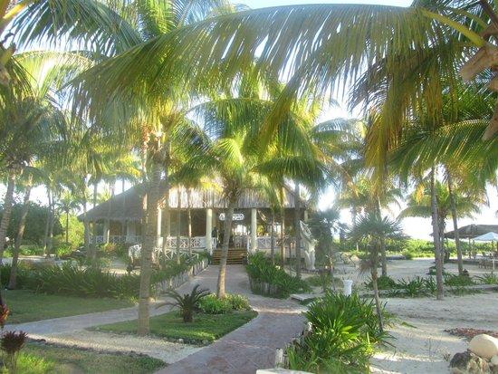 Melia Cayo Guillermo : gardens