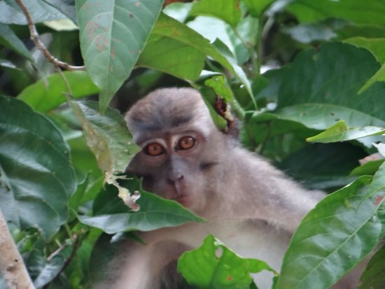 Bilit Rainforest Lodge: Hello