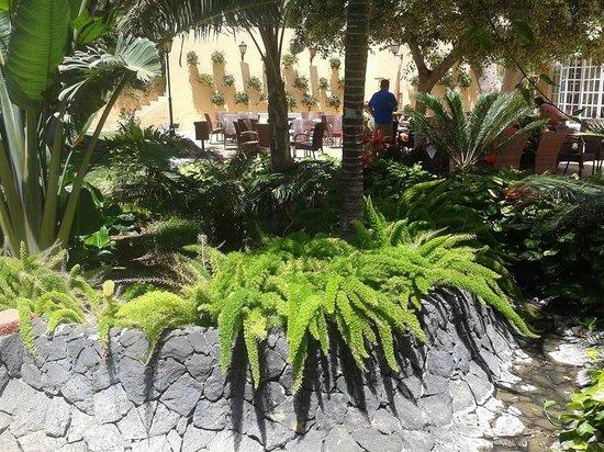 Bahia Principe San Felipe: Exóticas plantas en los jardines de la zona de piscinas