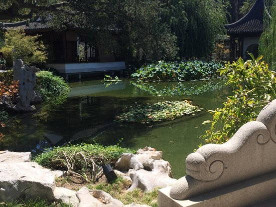 The Huntington Library, Art Collections and Botanical Gardens : Peaceful