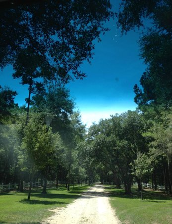 Hopsewee Plantation: The road that leads to the plantation