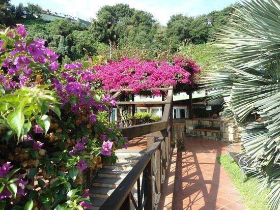 Agave Hotel Residence Inn: PERGOLATO FIORITO