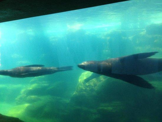 sea lions picture of aquarium of the pacific