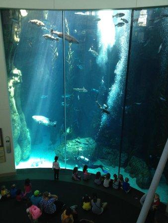 Aquarium of the Pacific : divers feeding fish in the main aquarium