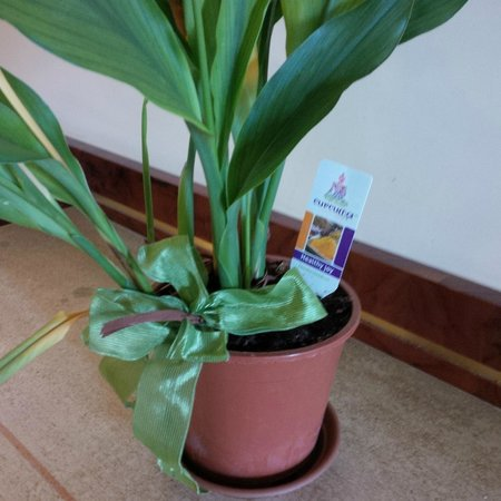 Brufani Palace Hotel : Cheap plant in Foyer