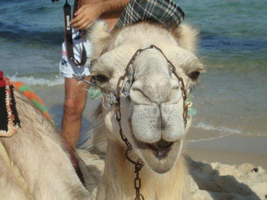 Concorde Hotel Marco Polo: Il cammello sulla spiaggia