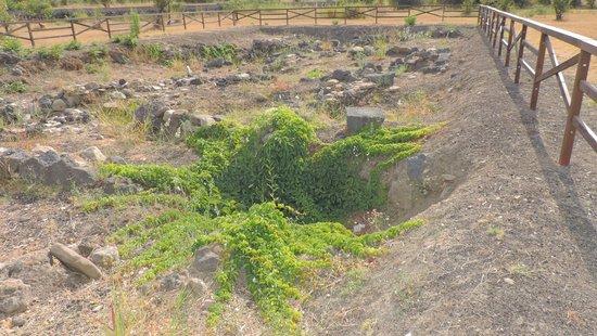Museo archeologico di Naxos - Gli Scavi, Giardini Naxos