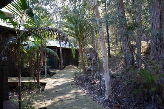 Kingfisher Bay Resort: Hotel grounds outside villas