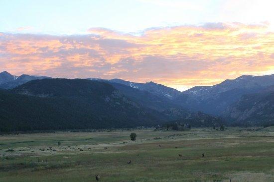 Trail Ridge Road : Elk gathering at dusk