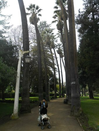 Quinta Vergara: Jardim