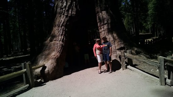 Mariposa Grove of Giant Sequoias: Hinthers at Giant Sequoia!