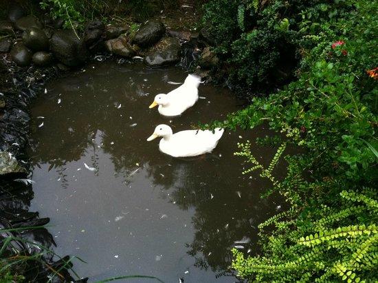 The Old Croft House Vegetarian B&B on Isle of Skye: Duckies!