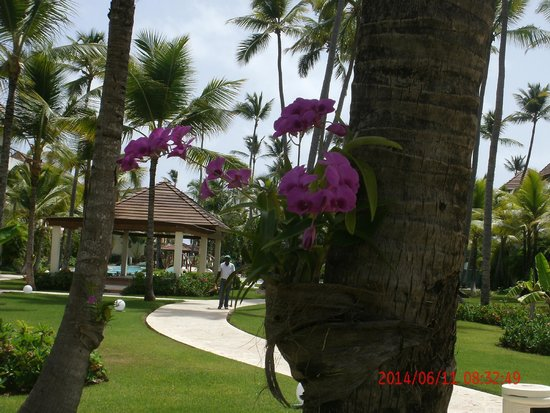 Secrets Royal Beach Punta Cana: Clean premises