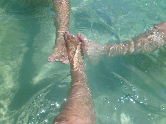 Best of Ocho Rios: agua cristalina