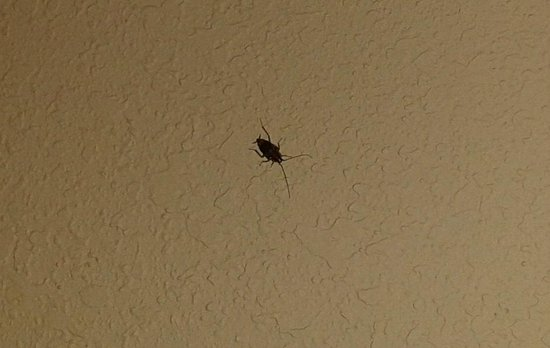 Motel 6 Ormond Beach: roach on wall