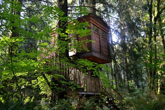 Treehouse Point: The Burl Tree House