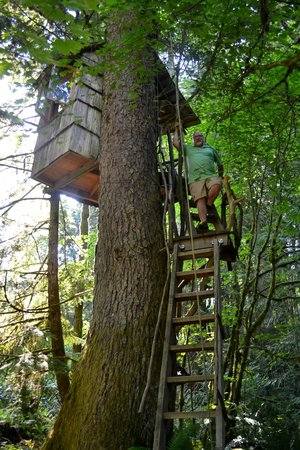 Treehouse Point: Lookout Area