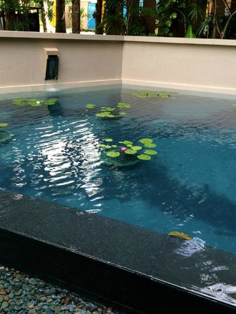 Novotel Phuket Kata Avista Resort and Spa: Beautiful water lilies near the reception