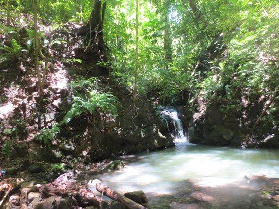 Bosque del Cabo Rainforest Lodge: Creek Trail pool