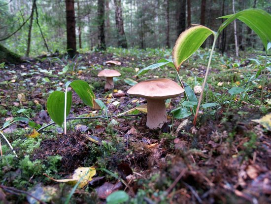 Wilderness Experiences in Soomaa National Park: Mushroom time