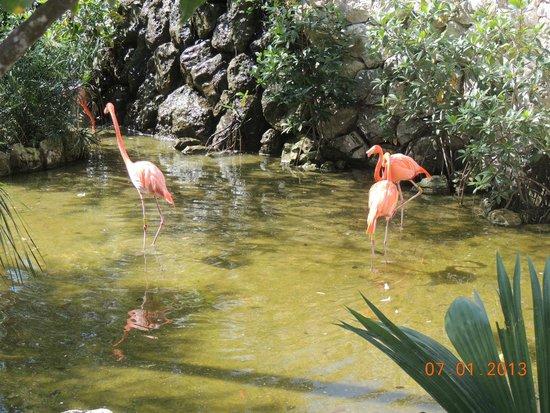 Xcaret Park: Flamingos