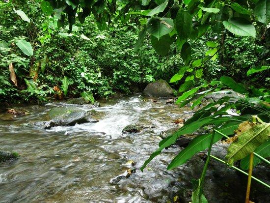 Casa Luna Hotel & Spa: river on the trail